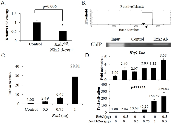 (A) RT-qPCR confirmed downregulation of Hey2 expression in
