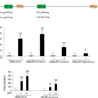 (PDF) cis-Regulatory Control of Mesp1 Expression by YY1