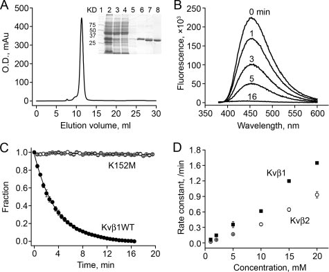 Enzymatic properties of Kv1. A, the conserved core (amino