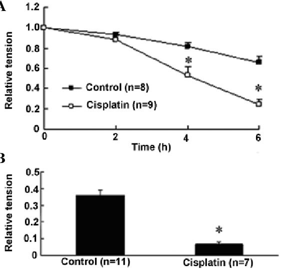 Effect of cisplatin on the relative tension of endothelium