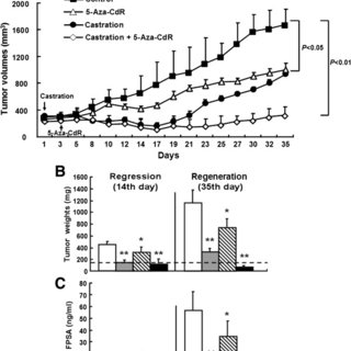 miR-146a expression in human prostate cancer xenograft
