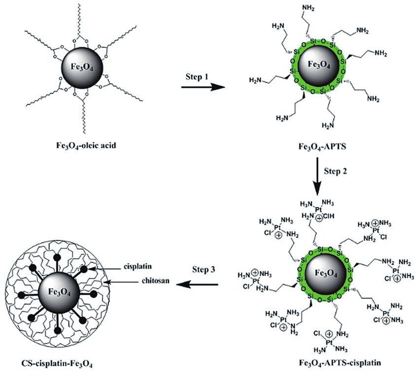 Synthesis route for CS-cisplatin-Fe3O4. Fe3O4-oleic acid