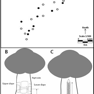 (PDF) Influence of Trap Type and Location on Tree Trunk on