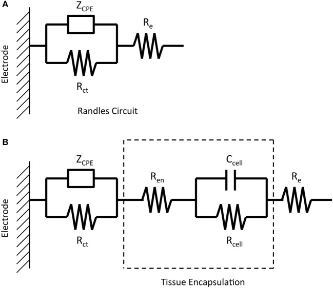 Equivalent circuits representing the impedance of a micro
