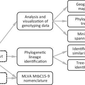 (PDF) MIRU-VNTRplus: A web tool for polyphasic genotyping