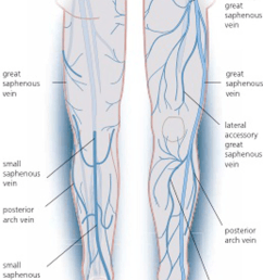schematic view of venous anatomy from insightful phlebology an atlas for diagnosis and treatment of venous [ 850 x 1792 Pixel ]