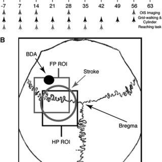 Schematic of experimental procedures. Schematic showing