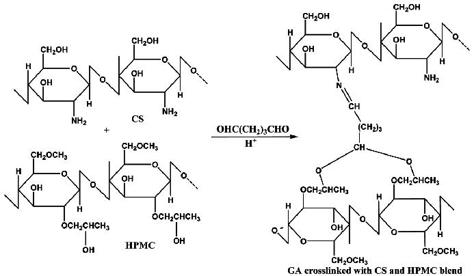 Scheme 1. Schematic crosslinking chemistry of GA