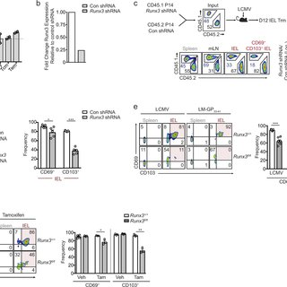 (PDF) Runx3 programs CD8 T cell residency in non-lymphoid