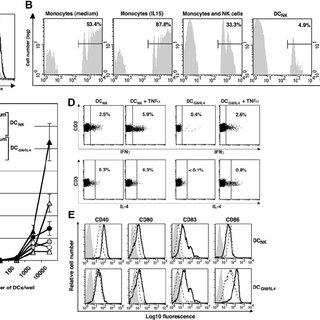(PDF) Natural killer cells trigger differentiation of