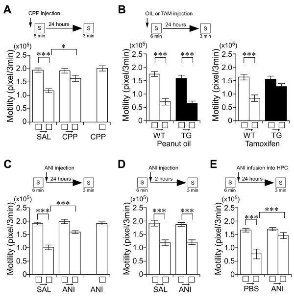 Place memory formation requires NMDA receptor function