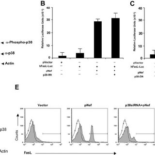 (PDF) HIV-1 Nef-induced FasL induction and bystander