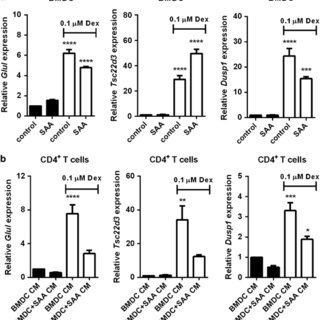 SAA-induced HSP70 modulates caspase-3 activity and is