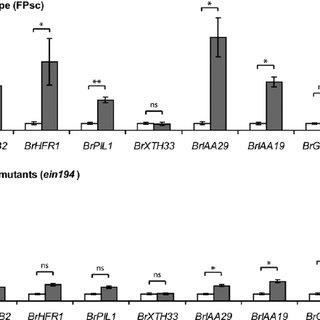 Figure S5. Over-expression of Arabidopsis phyB causes