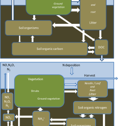 simplified carbon c cycle upper diagram and nitrogen n cycle [ 850 x 1344 Pixel ]