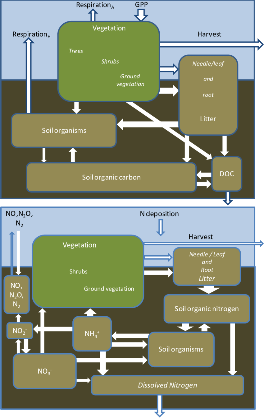 medium resolution of simplified carbon c cycle upper diagram and nitrogen n cycle