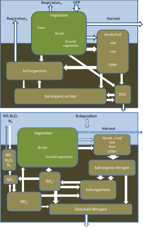 small resolution of simplified carbon c cycle upper diagram and nitrogen n cycle
