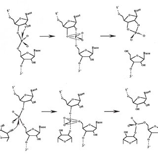 (PDF) Group II Introns: Structure and Catalytic