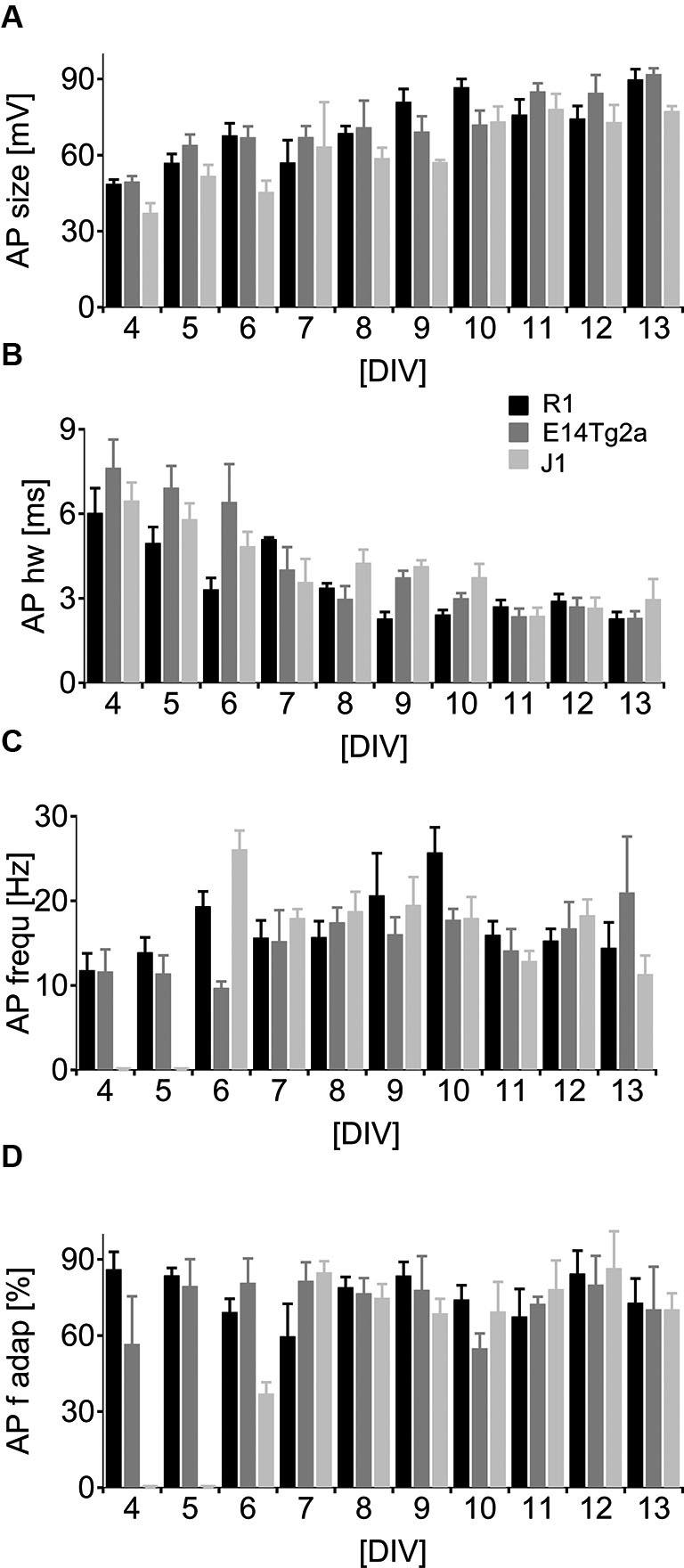 Neuronal spiking patterns as a function of developmental