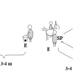 (PDF) Comprehension of human pointing gestures in horses