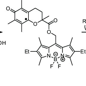 (PDF) Fluorogenic probes for imaging reactive oxygen species