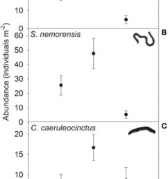 abundance means se of the centipede species a geophilus flavus and [ 850 x 1574 Pixel ]