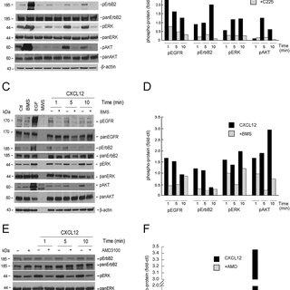 ADAM17 inhibitor INCB3619 suppresses tumor development in