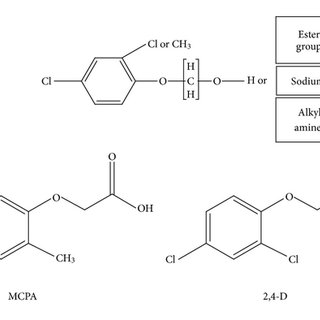 General chemical structure of chlorophenoxy compounds and