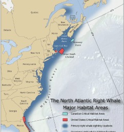 range and habitats of the north atlantic right whale eubalaena glacialis image used [ 850 x 1155 Pixel ]