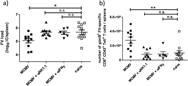 NK cells and IFNγ in persistently mCMV infected mice