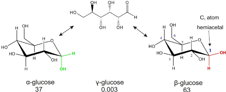 The interconversion of glucose anomers ( α , β and γ ) and