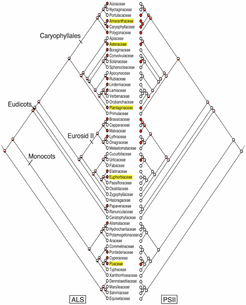 Phylogenetic tree showing the relationship among 52 plant