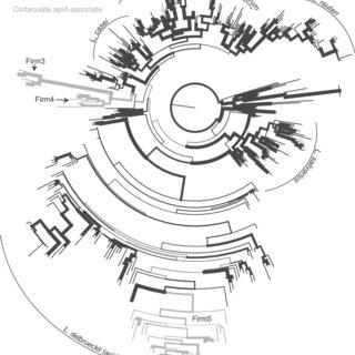 16S rRNA gene maximum-likelihood phylogeny of the genus