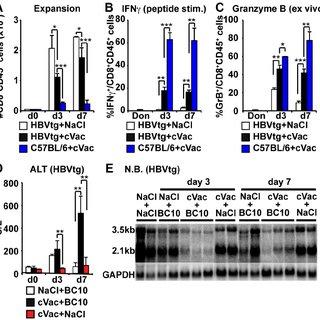 PD-1 deficient COR93-specific CD8 + T cells develop