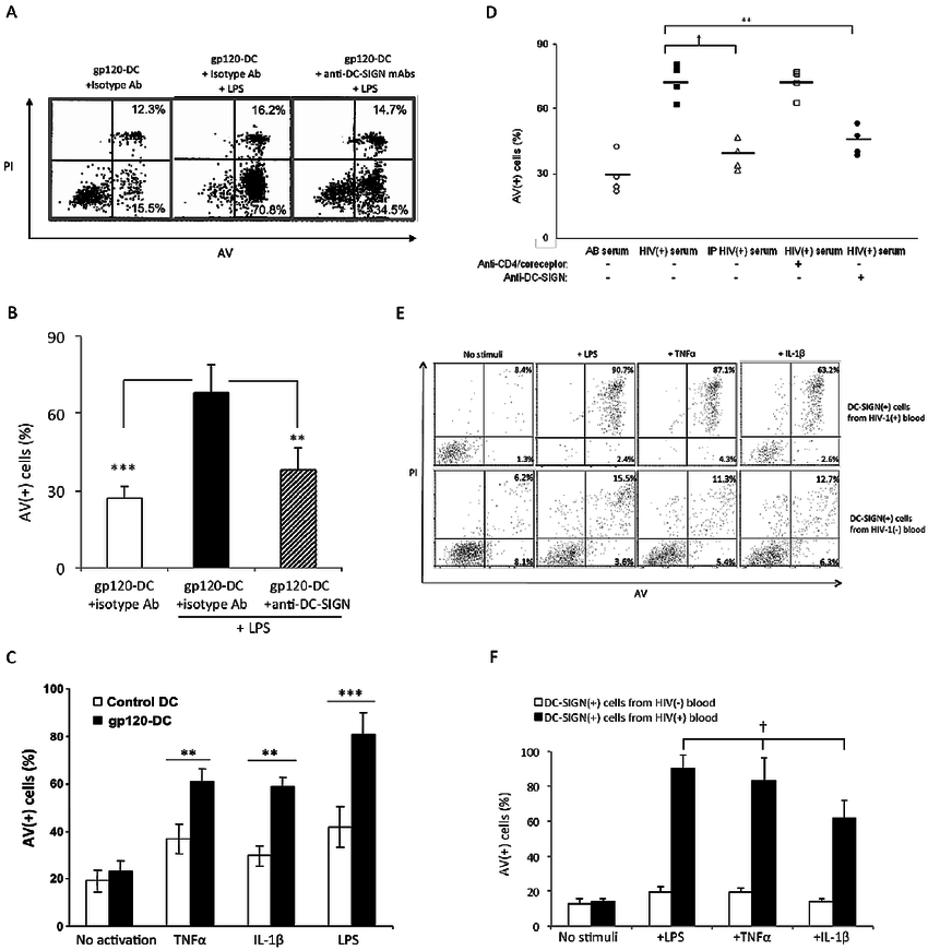 Cross-linked recombinant gp120 or HIV( + ) serum