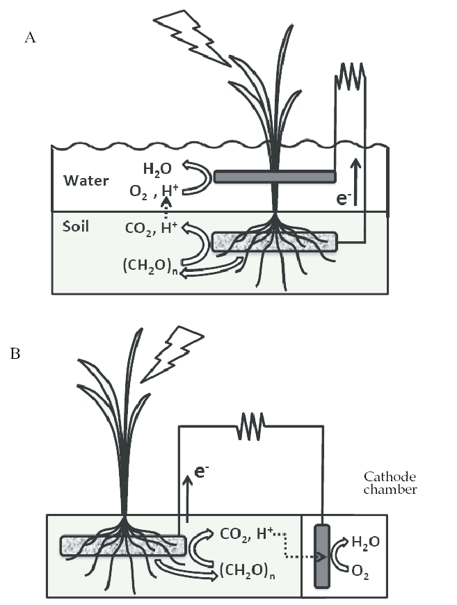 Systematic diagrams for a rice paddy-field MFC (A) and