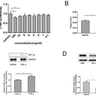 (PDF) TNF-alpha Mediated Increase of HIF-1 alpha Inhibits