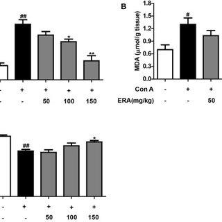 (PDF) Protective effect of Rabdosia amethystoides (Benth