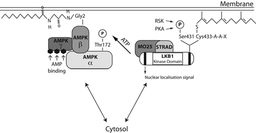 Schematic representation of the potential mechanism by