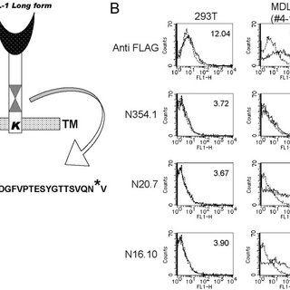 (PDF) Expression and functional role of MDL-1 (CLEC5A) in