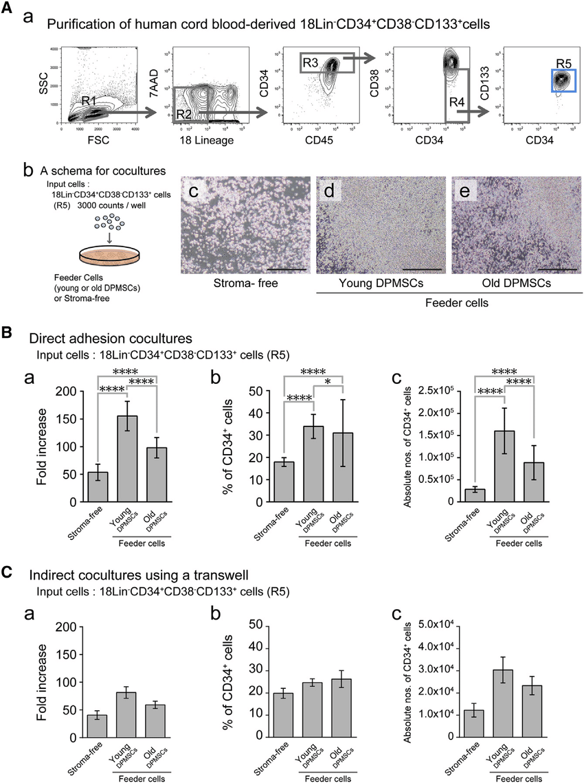 hight resolution of human hematopoietic stem progenitor cell supporting abilities of bone tissue derived dpmscs from