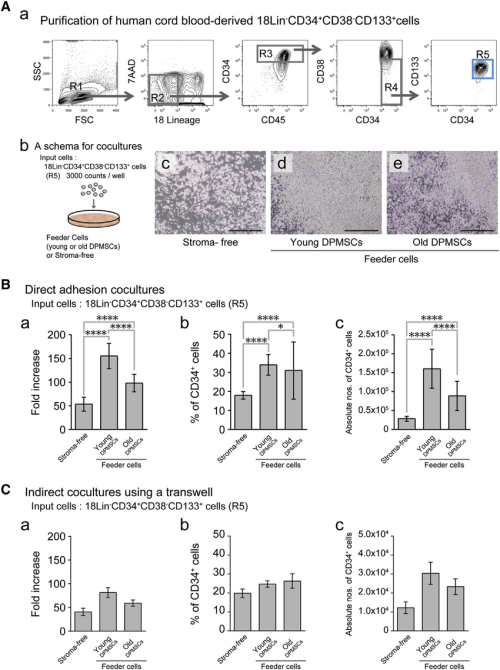 small resolution of human hematopoietic stem progenitor cell supporting abilities of bone tissue derived dpmscs from