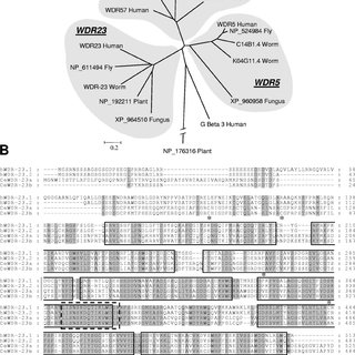 (PDF) The WD40 Repeat Protein WDR-23 Functions with the