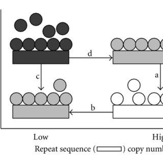 (PDF) Genetics: Polymorphisms, Epigenetics, and Something
