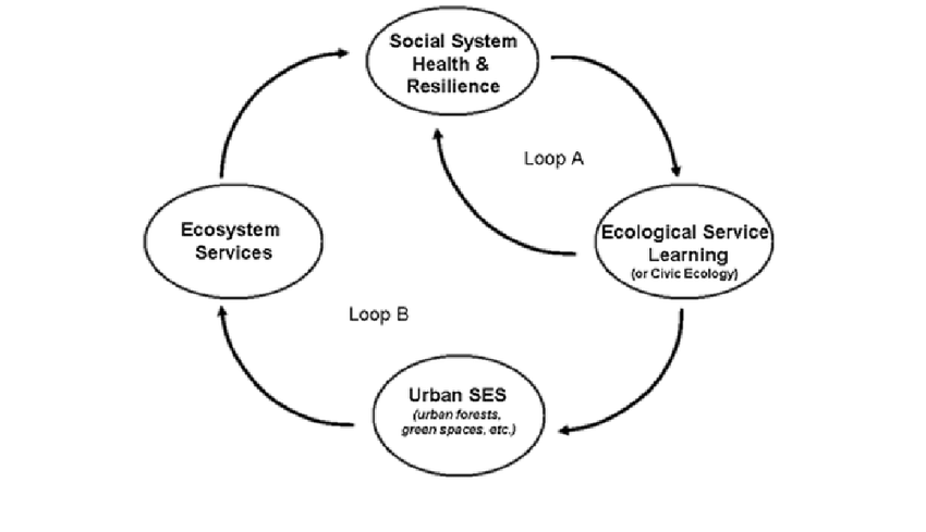Ecological service learning to foster resilience: feedback