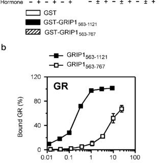 Localization of the GR HBD interaction region in GRIP1 by