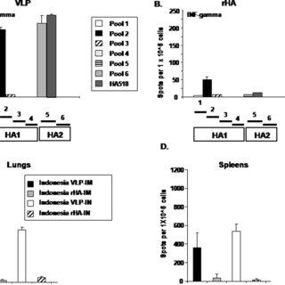 Elicitation of HA interferon- c producing splenocytes and