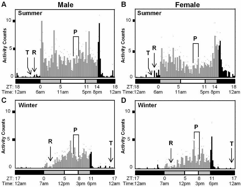 Daily locomotor activity profiles of Drosophila suzukii