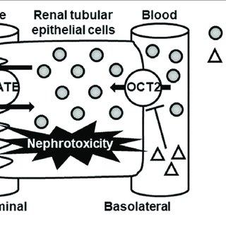 (PDF) Drug Repositioning of Proton Pump Inhibitors for