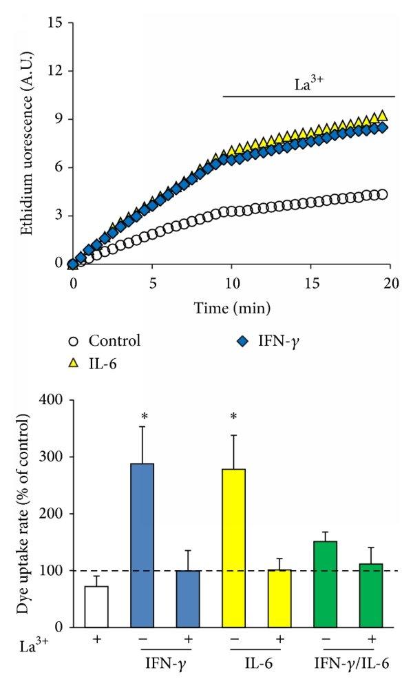 Connexin and pannexin expression in antigen-presenting cells. Summary...   Download Scientific Diagram